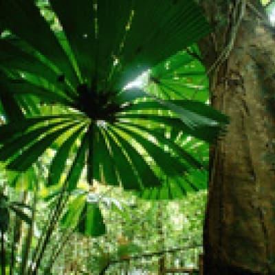 Au cœur de la végétation luxuriante