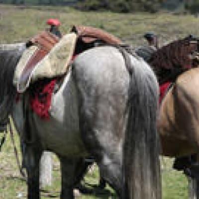 Randonnée à cheval à Chugchilan