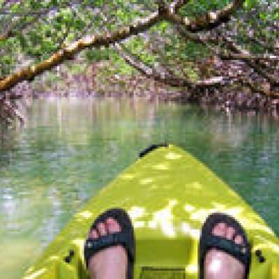 Canoë dans la mangrove