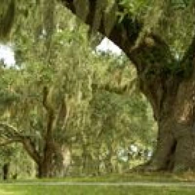 Plantations et Jardins à Charleston