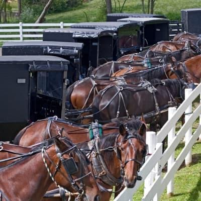 Rencontre avec la communauté Amish du comté de Lancaster
