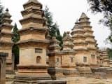 Séjour foret des pagodes