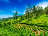Plantation de thé à Munnar: voyage Kerala