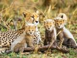 Safari Magique : du Tarangire au Serengeti