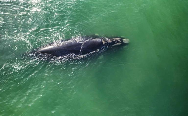 Observation des baleines à Hermanus