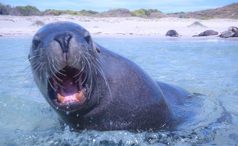 Observation des lions de mer à Isla Coronado