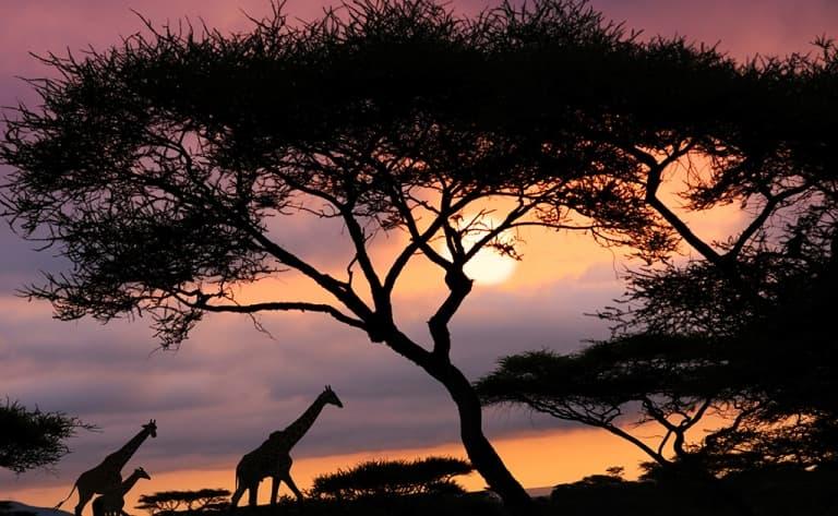 Safari de nuit dans le Grumeti