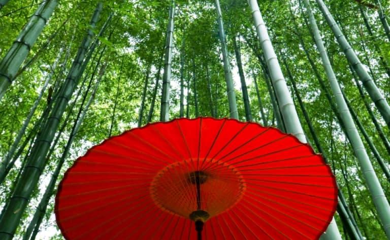 Visite de Sagano et Arashiyama