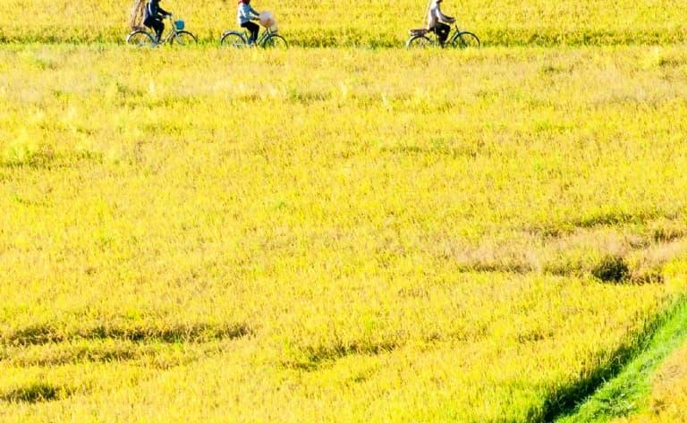 Le verger Vam Xang à vélo