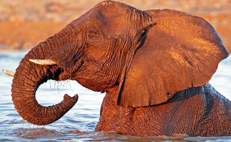 Safaris dans le parc d'Etosha