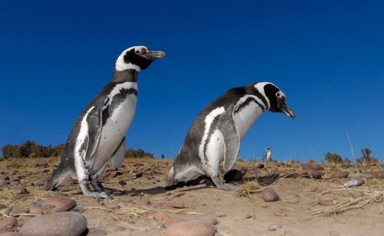 Puerto Madryn et la réserve de Punta Tombo