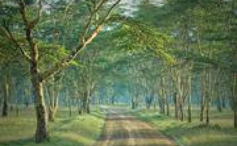 Arabuko Sokoke Forest Reserve