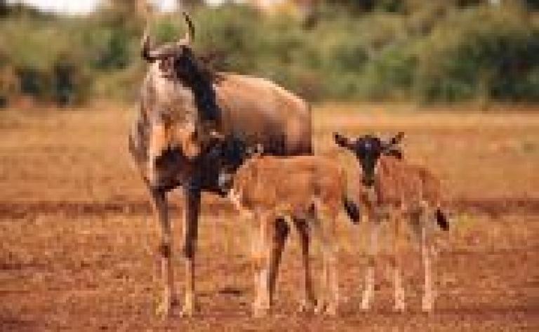 Petits treks à la découverte de la nature à Ol Pejeta Conservancy
