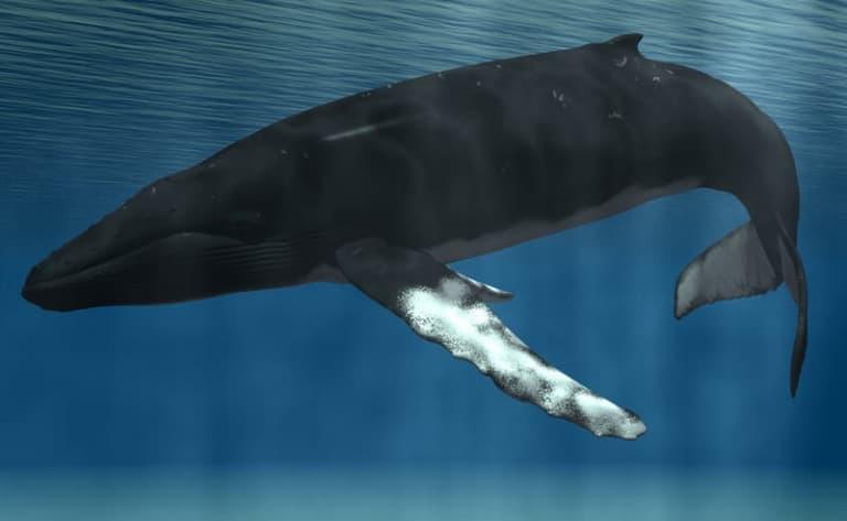 Croisière aux baleines - Saint Andrews