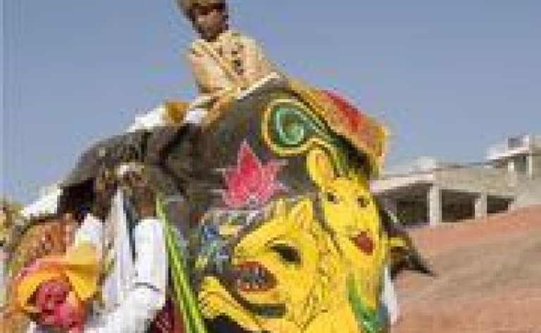 Promenade à dos d'éléphant