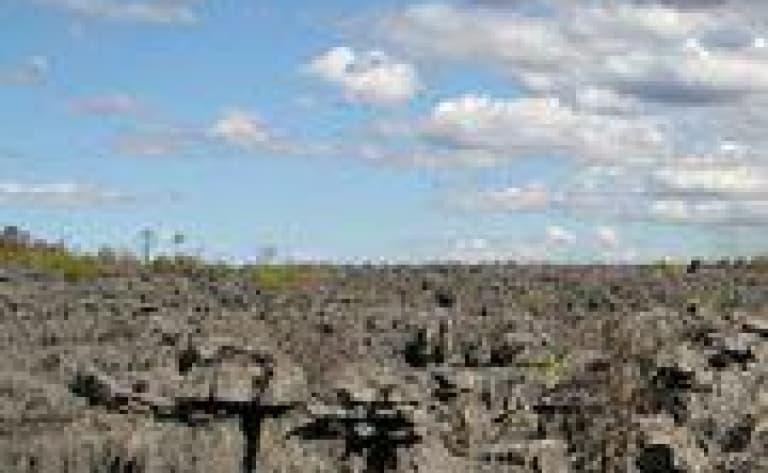 Le massif de l'Ankarana