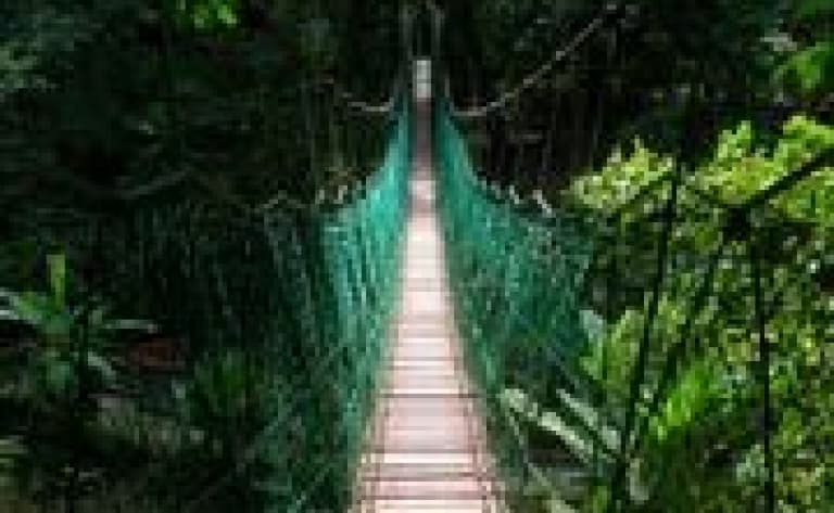 Taman Negara suspension bridge