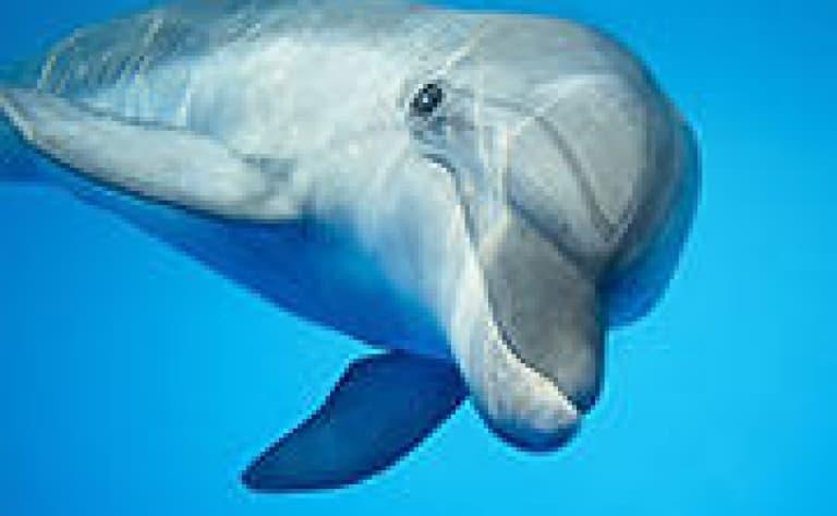 A la rencontre des dauphins et de la baleine bleue
