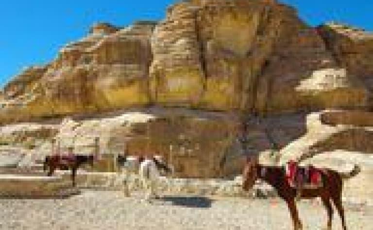 Promenade à cheval à Pétra