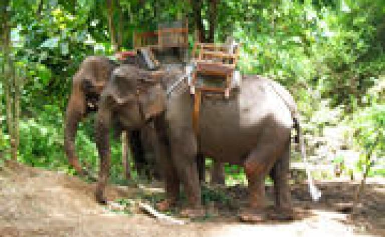 Excursion à Koh Tao et Koh Nang Yuan