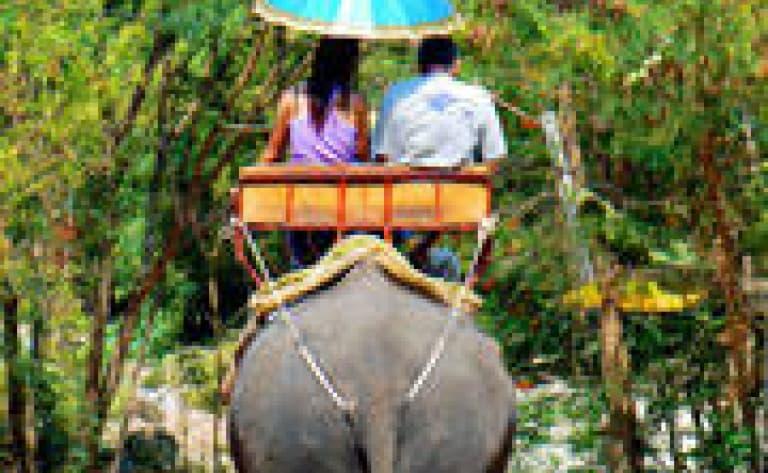 Balade à dos d'éléphants