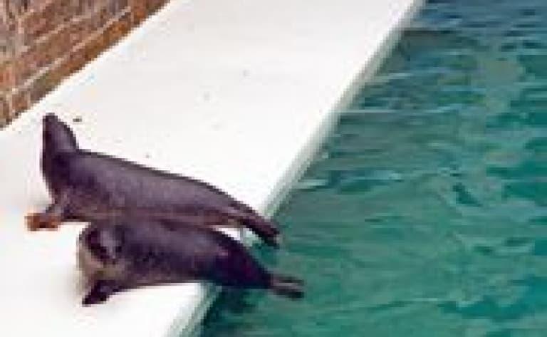 Miami Seaquarium (réservable par nos soins)
