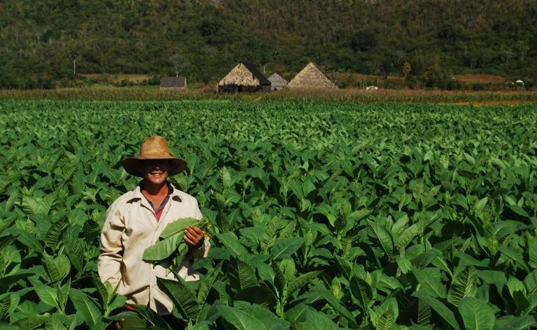 Les champs de tabac de Viñales et le jardin botanique de Soroa