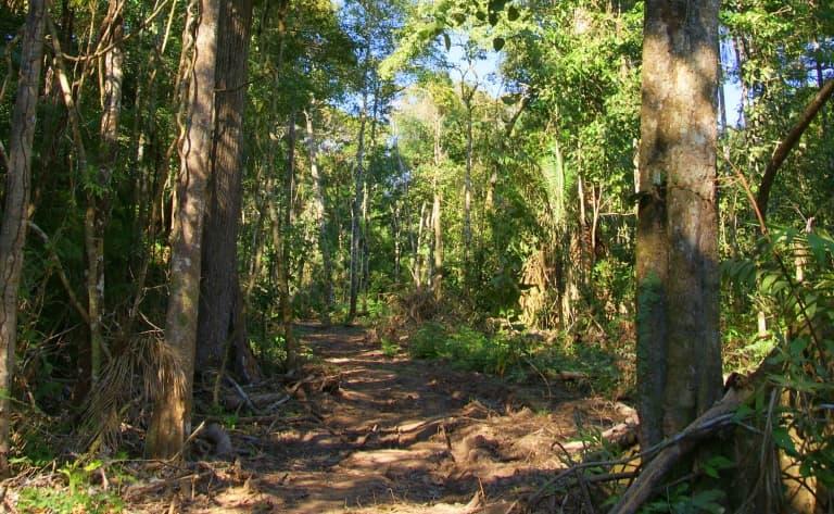 Randonnée dans le Parc National Amboro