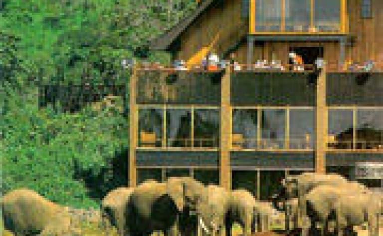 Hotel Aberdares National Park