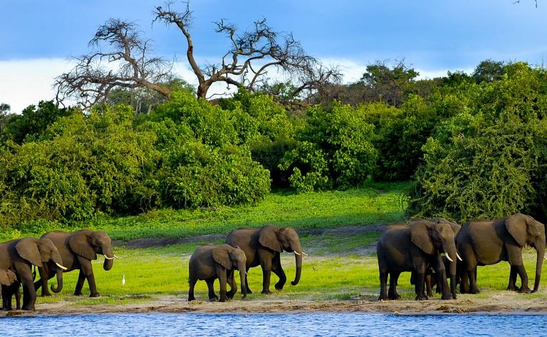 Les activités safari Okavango et Chobe proposées par les lodges