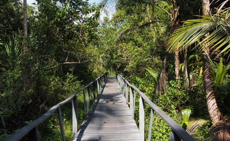 Balade au cœur de la forêt tropicale