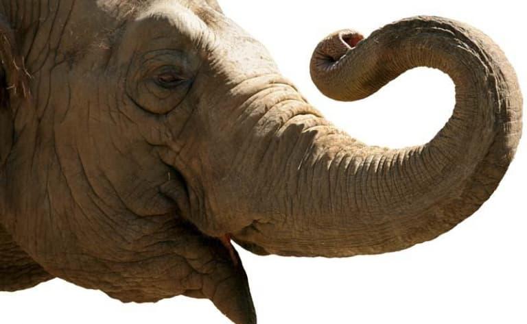 Echappée nature et éléphants !