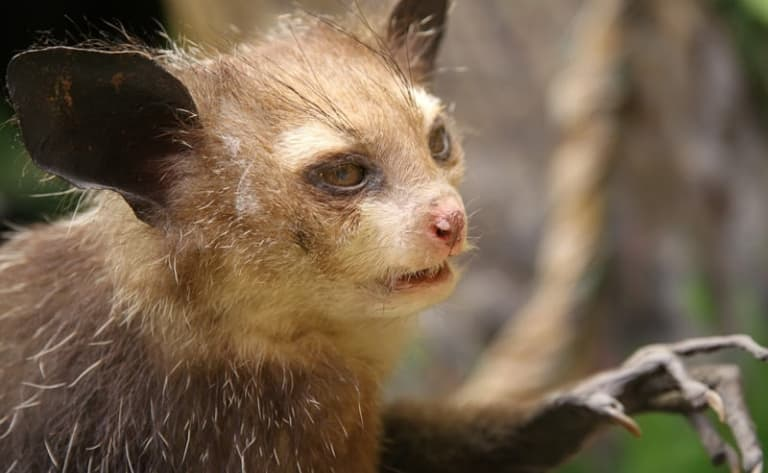 Faune : les espèces endémiques de Madagascar