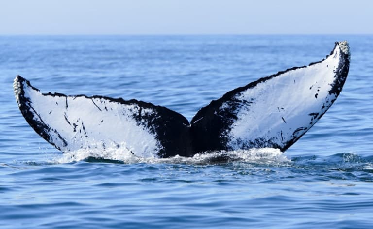 Découverte de l'île aux Nattes et observation des baleines