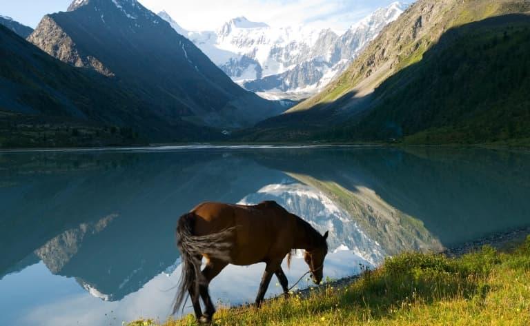 Acclimatation et découverte de la fascinante région de l'Altaï