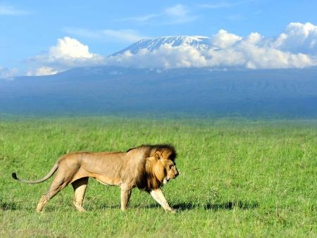 Safari au pays des éléphants
