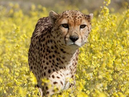 Savane et faune de Tsavo Est