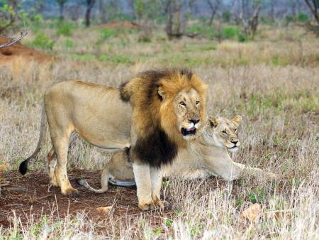 Safaris en Réserve Privée