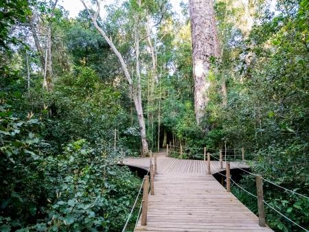 Le Cœur de la route des Jardins et la Forêt de Tsitsikamma