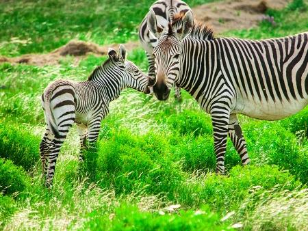 Safaris d'exception dans une réserve privée