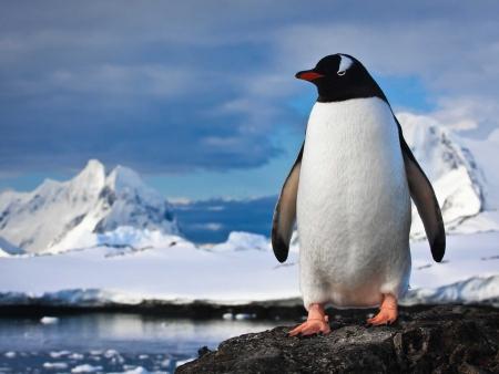 La péninsule Antarctique