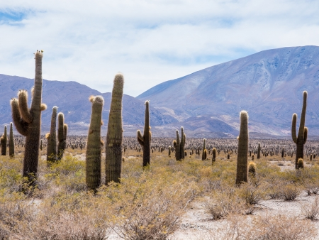 Le parc National Los Cardones