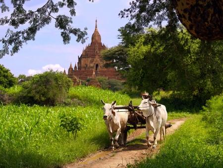 Dans la jungle de Mandalay à Bagan
