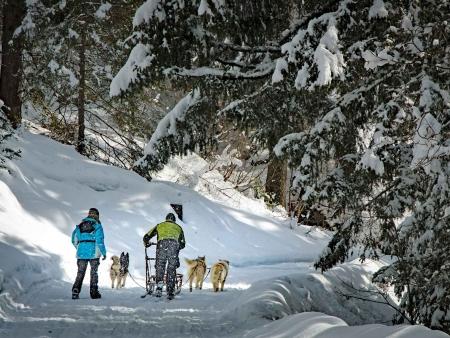 Balade en traîneau à chiens sur les étendues sauvages !