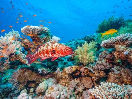 Isla Iguana : Refuge Maritime du Pacifique