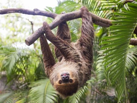 Les paresseux et les singes du Parc National Manuel Antonio