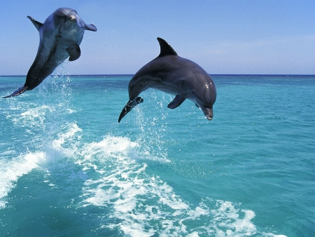 Excursion en bateau pour observer les dauphins