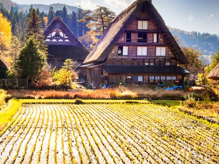 Dégustation de saké à Takayama et maisons traditionnelles de Shirakawa-go