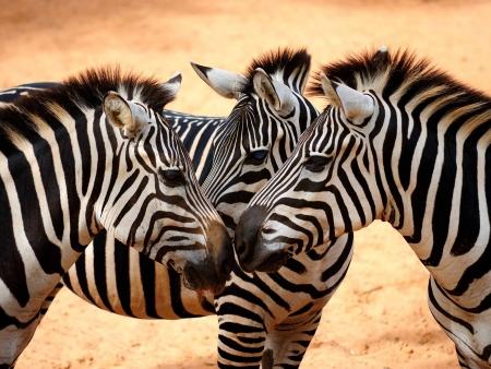 Le Masai Mara, plus beau parc kenyan