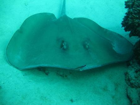 Paradis terrestres et sous-marins des îles Perhentians